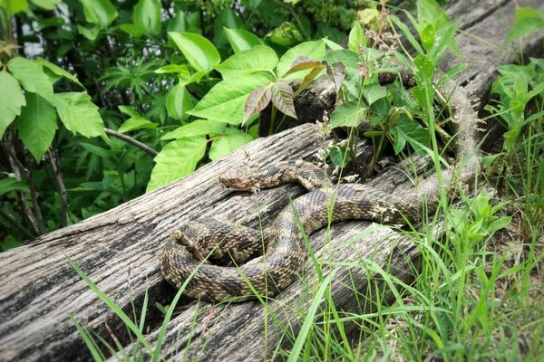 Stalking serpents in Perrot State Park